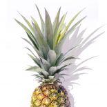 Pineapple Top
