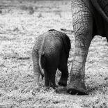 Mama and Baby Elephant II