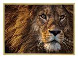 Wildlife Poster van Leeuw met Houten Fotolijst