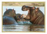 Wildlife Poster van Nijlpaard met Houten Fotolijst