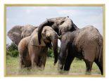 Wildlife Poster van Olifant met Houten Fotolijst