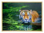 Wildlife Poster van Tijger met Houten Fotolijst