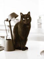41094_f_Lights Cat Action_thumb.jpg