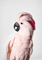 85Print_SisiAndSeb_ISO_Pink Cockatoo.jpg