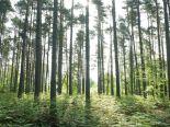 AF20090510 Trees 082_thumb.jpg