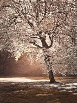 AF20111028 Autumn Trees 042C02.jpg