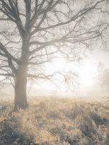 AF20190214 Forest 034C01.jpg