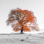 AF20191110 Tree 2933-PanoPC12.jpg