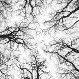 AF20210101 Trees 042C01.jpg